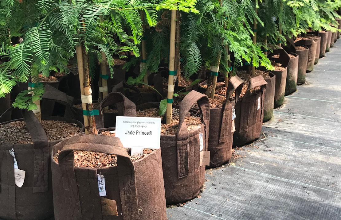 Root Pouch - Pots That Breathe