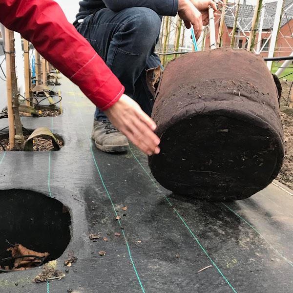 Root Pouch Boxer Brown Line ნაჭრის ქოთნები