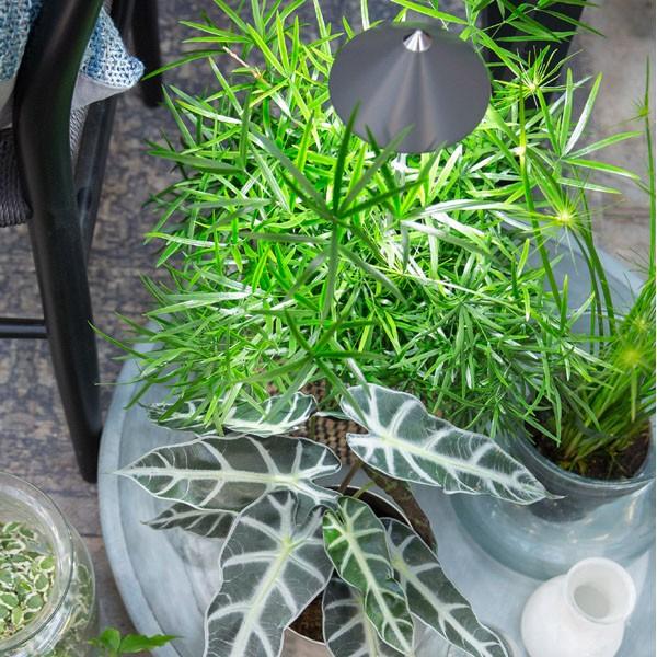 Parus iSUN Pot-Led Indoor Gardening